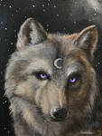 Wolf, daily painting