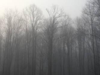 Foggy Mornin by DatFox273