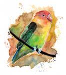 As colourful as the rainbow