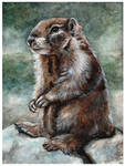 Marmotte by Paintwick