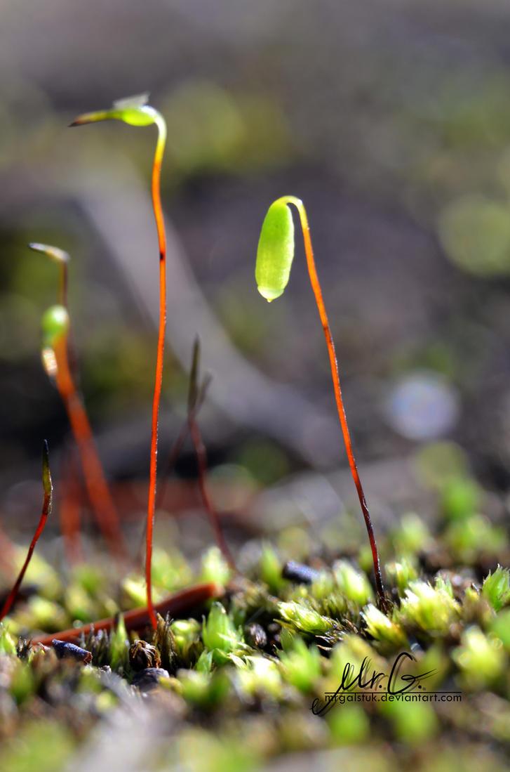 Moss by MrGalstuk