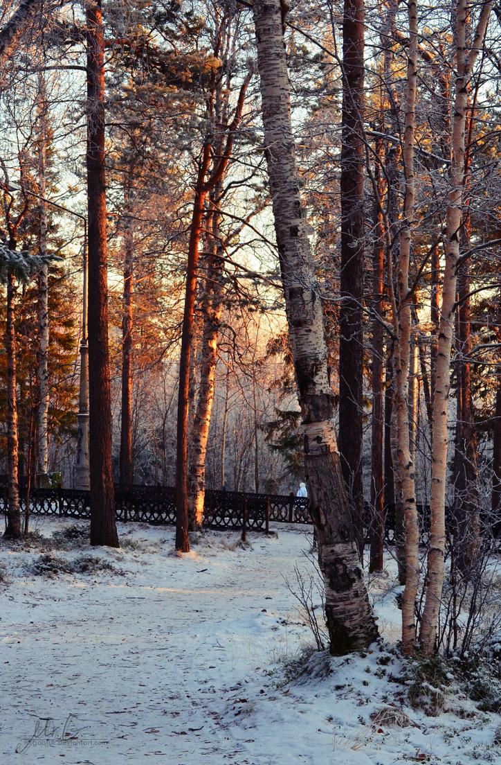 Winter Coming by MrGalstuk