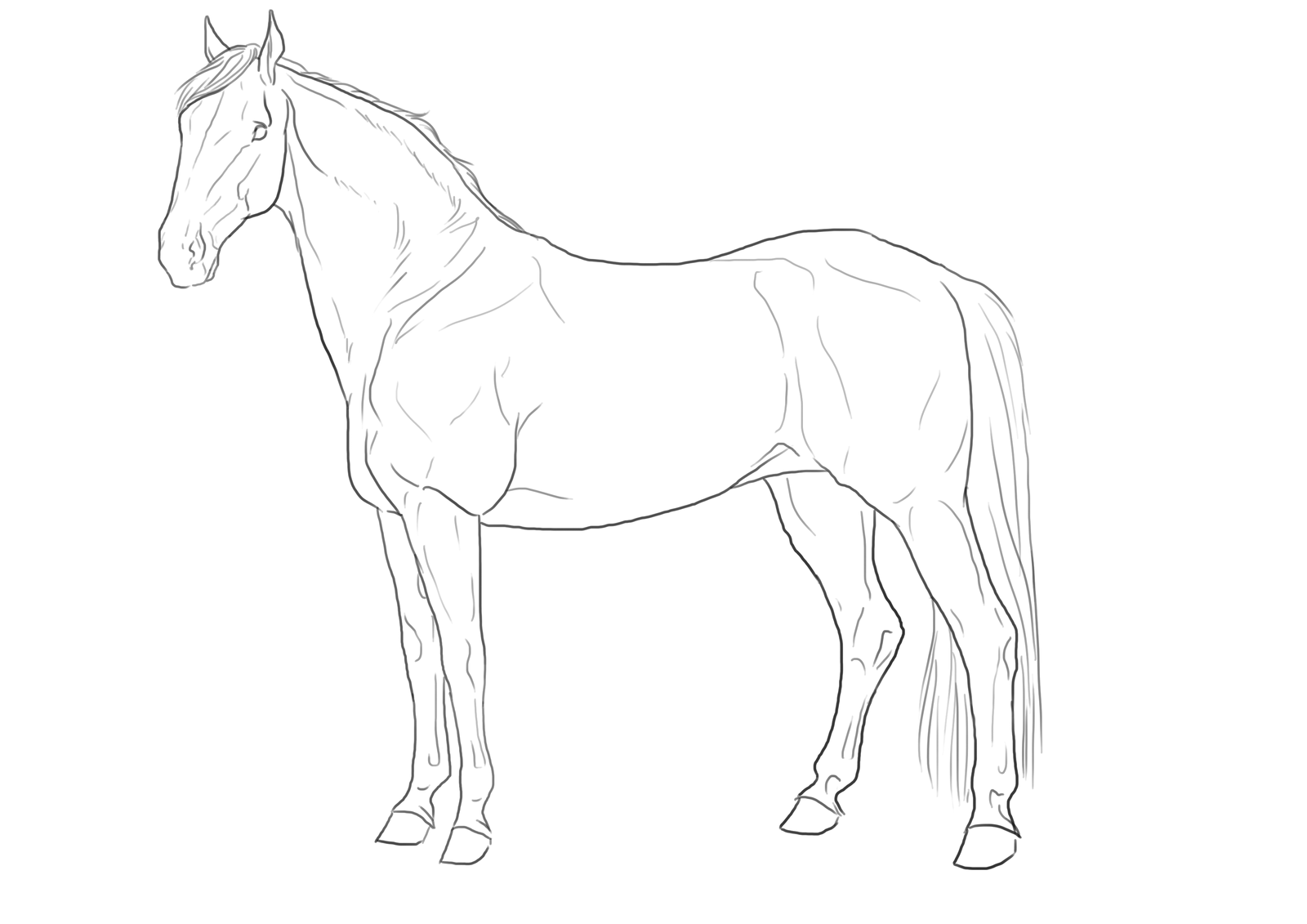 Line Drawings From D Models : Free lineart hanoverian by darya on deviantart