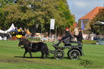 7 - 2014 - Shetland Pony Carriage 2