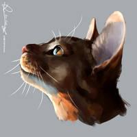 Cat no3