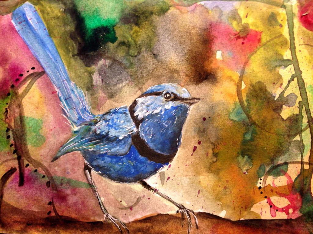 Splendid-Fairy wren by nornas