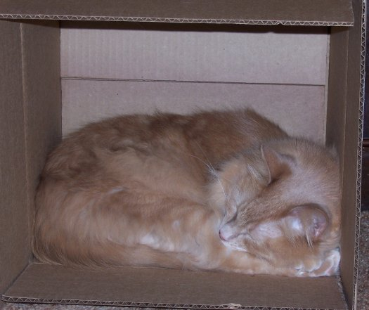 Cat in a Box by wemustnotforget