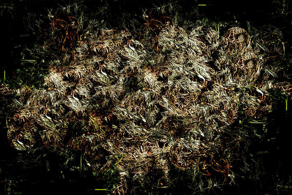 Grass Texture 1 by KOOLKUL
