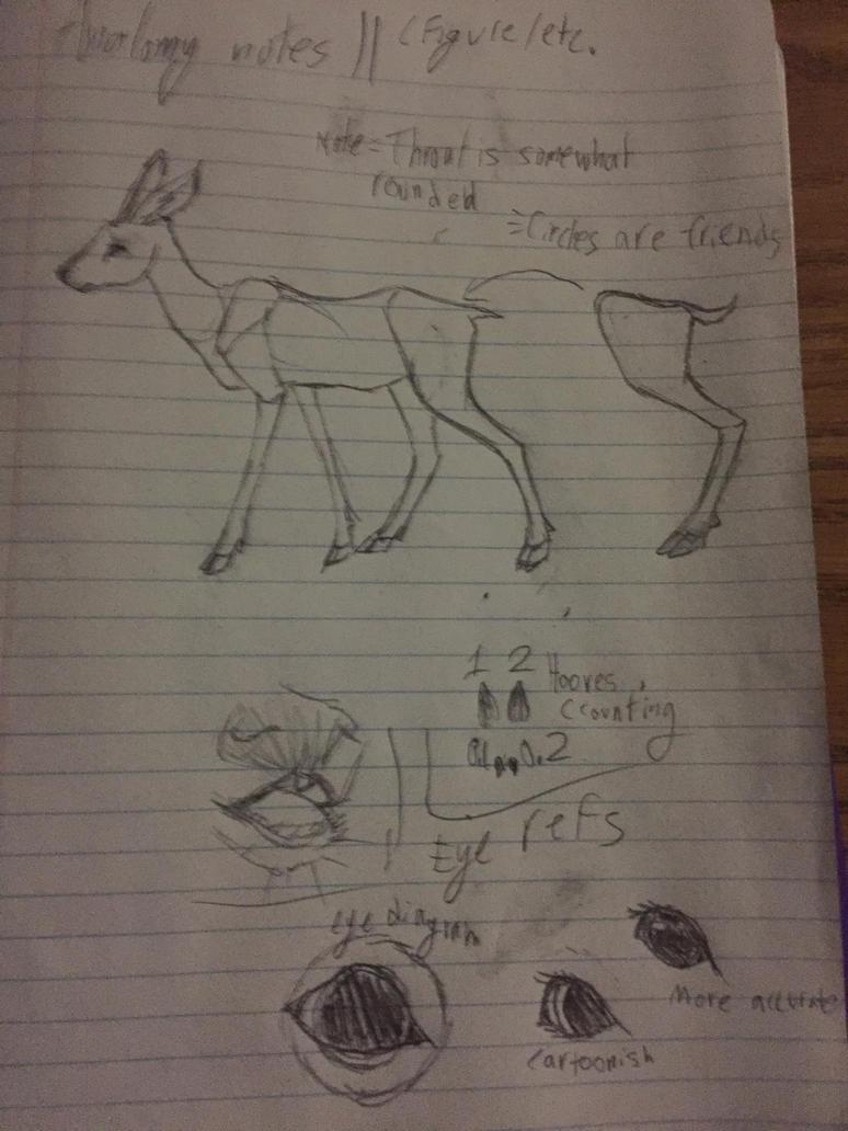 weird deer anatomy journal thing i did at school by Waxney on DeviantArt