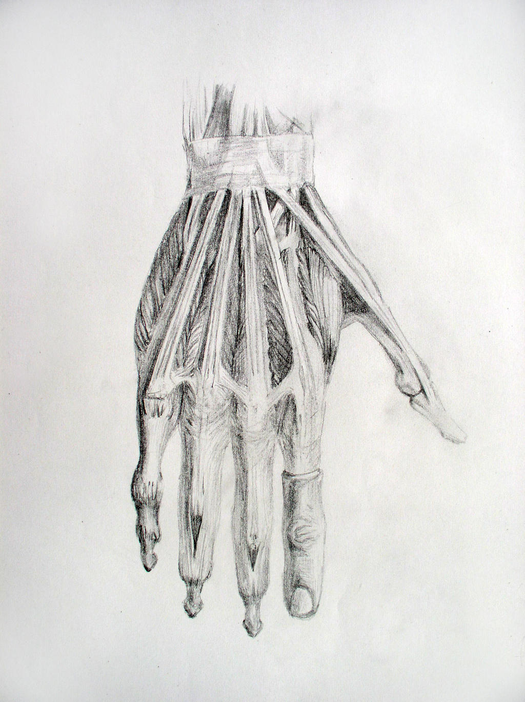Hand Anatomy by San-T on DeviantArt