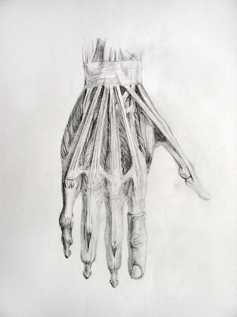 Hand Anatomy by San-T on DeviantArt