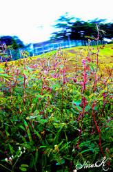 grassy adventure