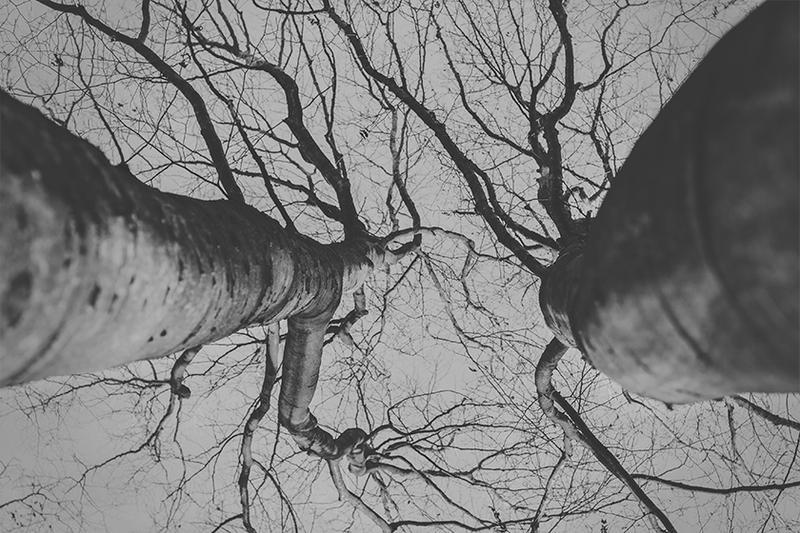 Love Trees by M-0-N-0
