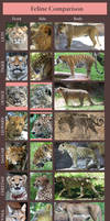Feline Comparison: Huge