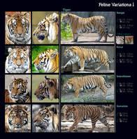 Feline Variations I: Tiger by sindos