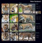 Feline Variations I: Tiger