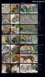 Feline Variations II: Leopard