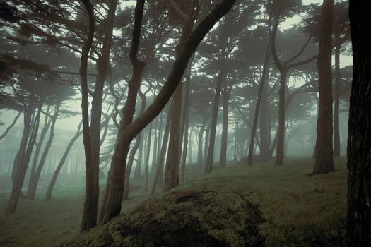 San Francisco woods