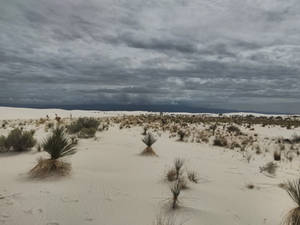 White Sands bedrock view