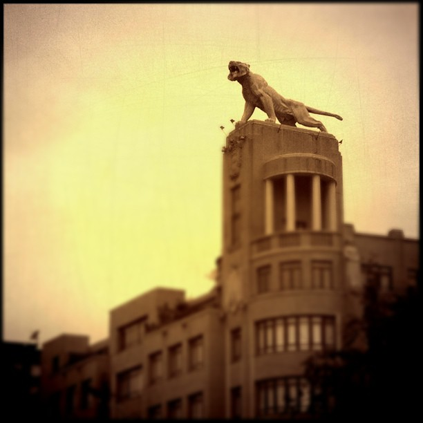 Tigre by Sospe