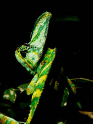 Chameleon by kez245