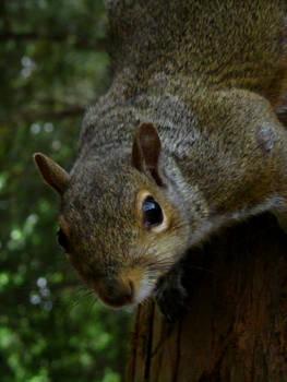 Squirrel investigation