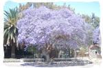Blue Tree, Asmara