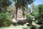 Festival Gardens, Asmara