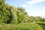 May Hedge