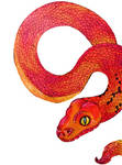 Coral snake by Marmarmia