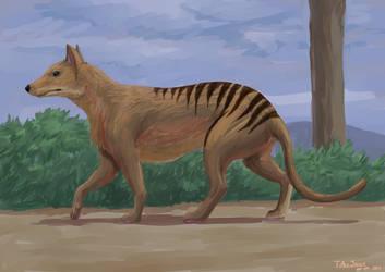 Oh, a Thylacine