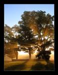 light rays 4
