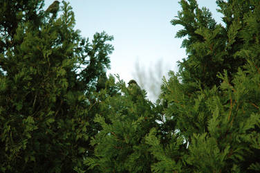 Green bird by Yaminade