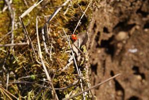 ladybug by Liisistock