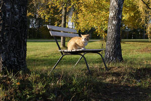 kitty on the bench by Liisistock