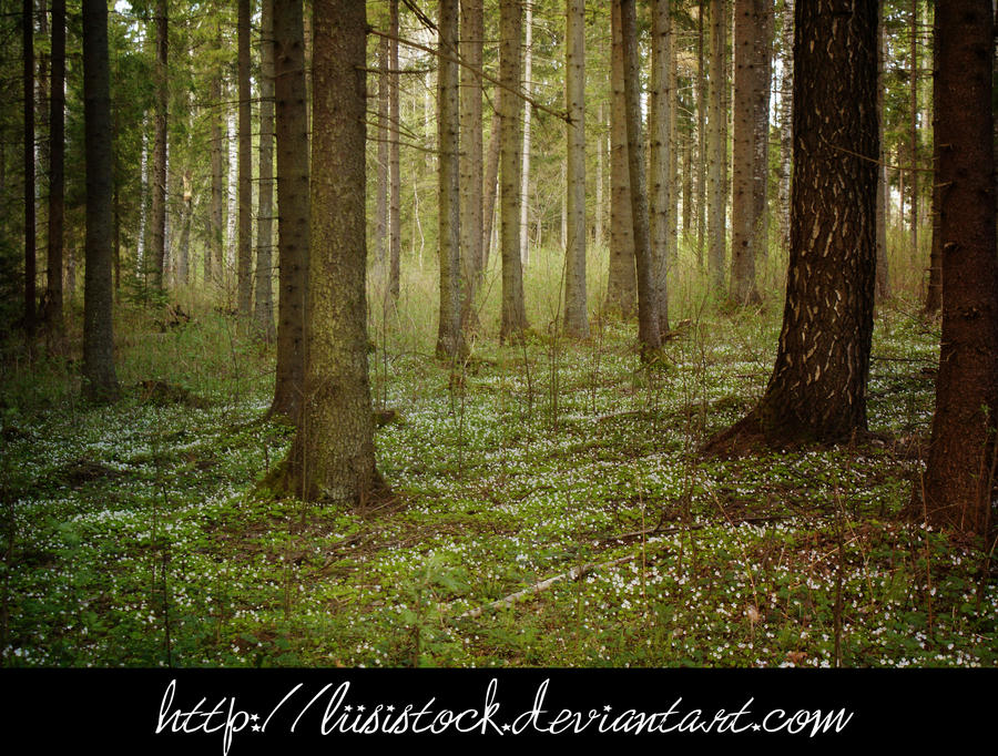 forest stock
