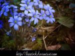 blueflowers stock