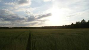 field stock 2 by Liisistock