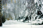Winter by dimitarmisev