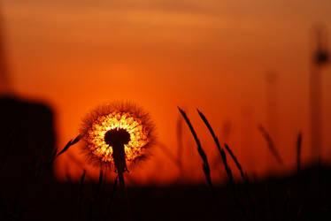 Little sun by dimitarmisev