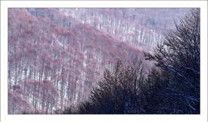 Winter trees by dimitarmisev