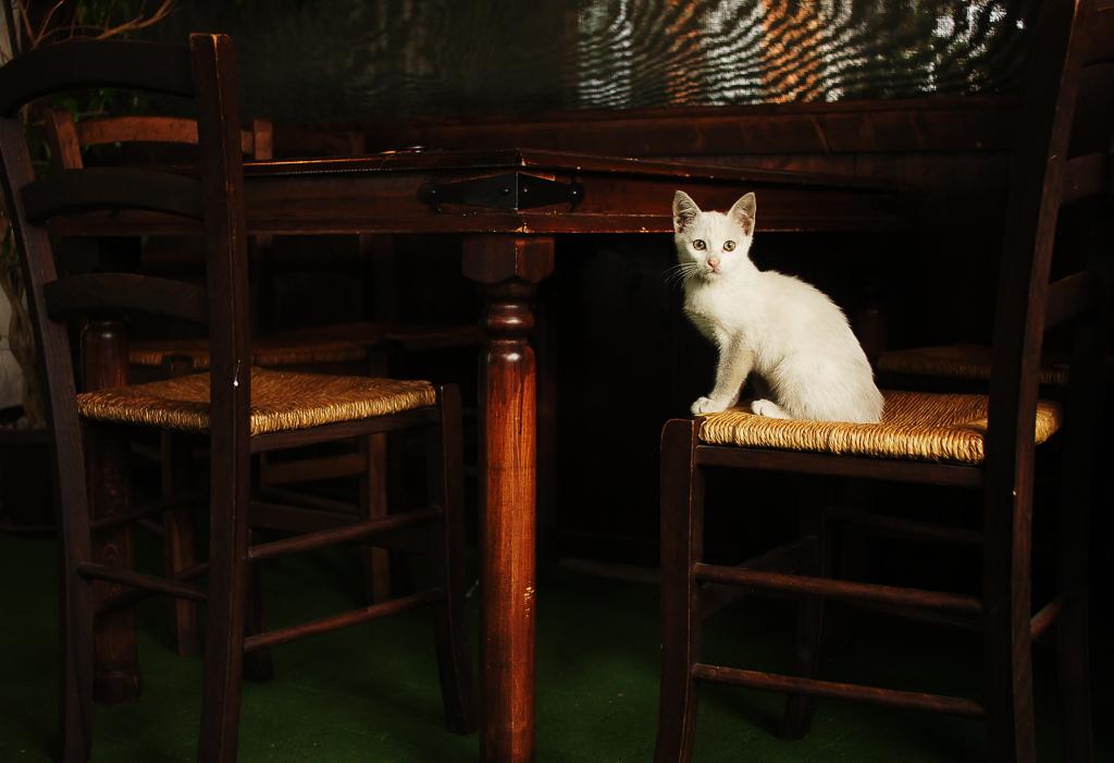 Portrait of a Cat by dimitarmisev