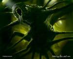 Alien Xenomorph spider