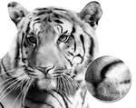 Tiger Stippling