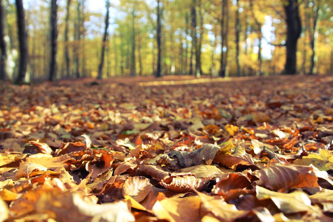 Fall Leaves by Morriazh