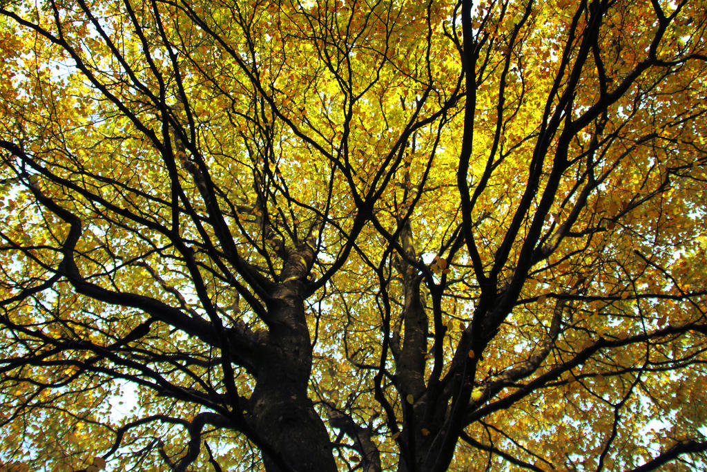Yellow Canopy by Morriazh