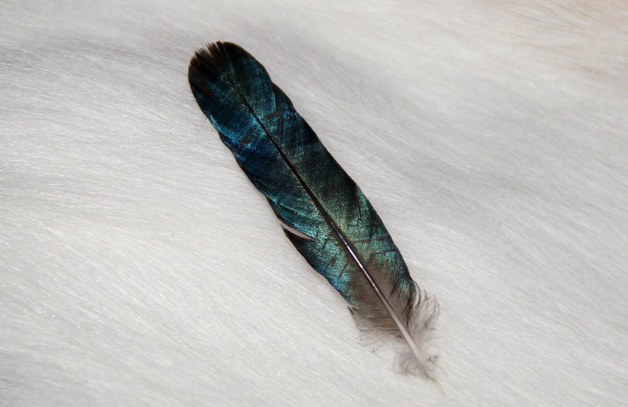 Nicobar pigeon feather by Featheroes on DeviantArt
