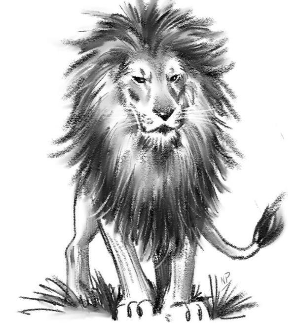 Lion Sketch by niknova on DeviantArt