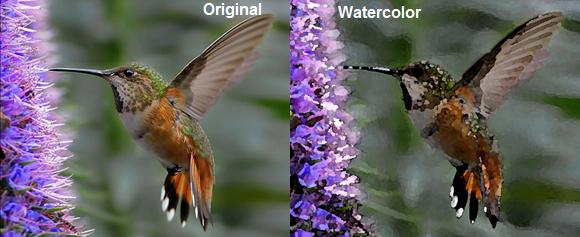 Hummingbird by Take-that-photo