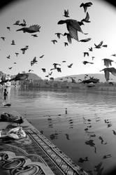 Pushkar, Rajasthan by deviantbipin
